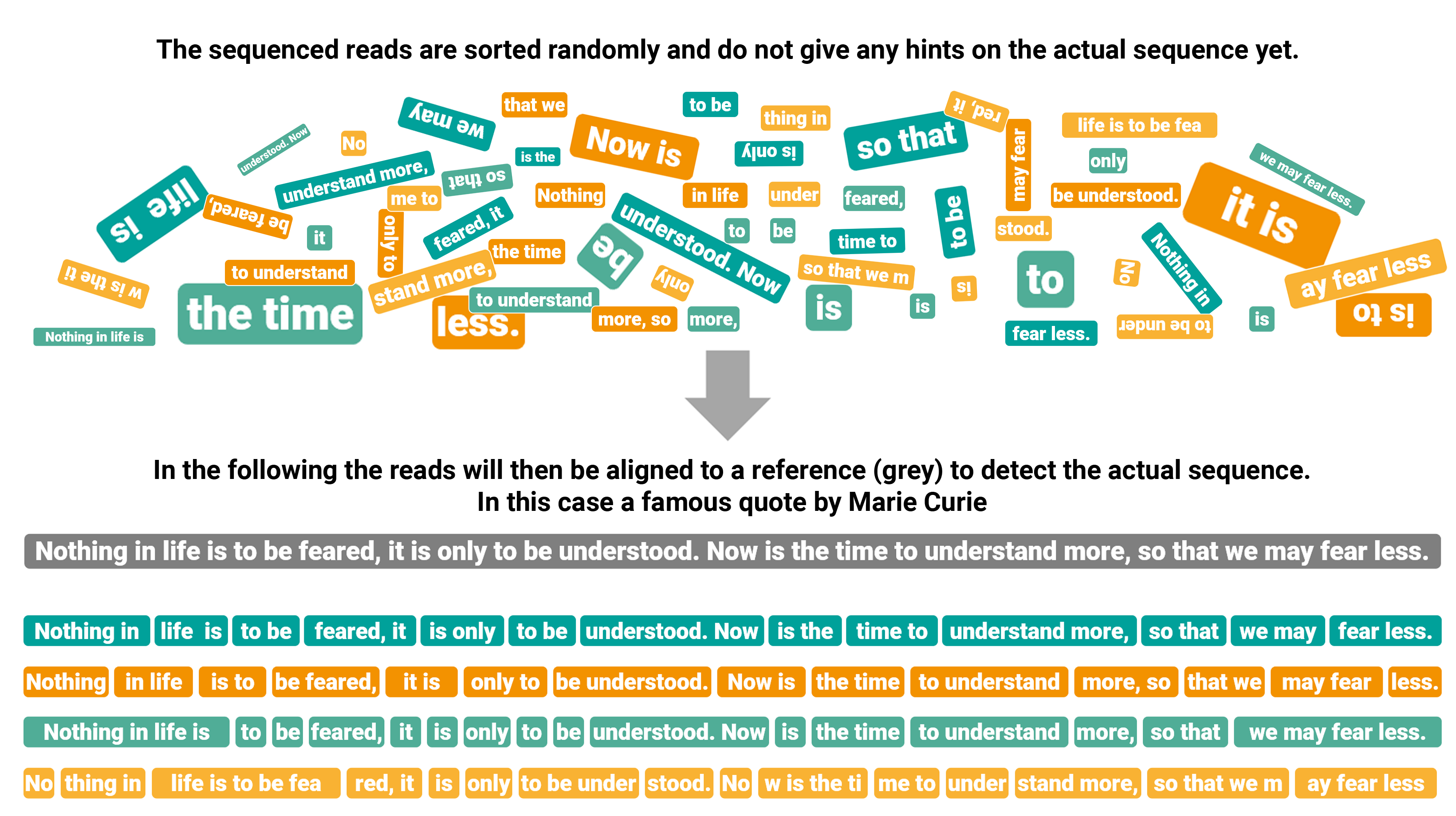 Graphical transposition of reads alignment.